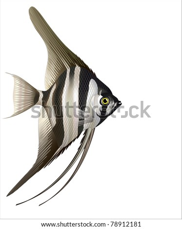 Raster version of vector/ Two-tone striped angelfish (Pterophyllum scalare)