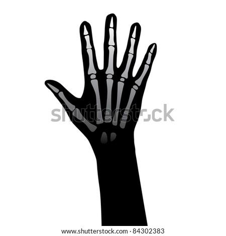 Raster version. Open hand anatomy  illustration on white background