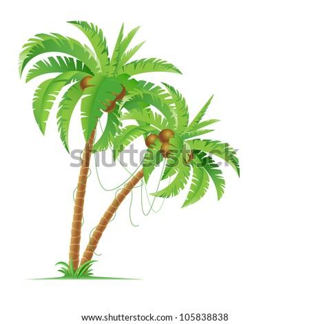 Raster version. Two palm trees. Illustration for design on white background