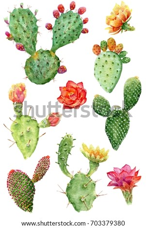 Raster watercolor isolated cactus set. Watercolor cactus isolated on white background. Watercolor cactus tropical garden. Elements.