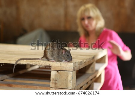 rat and a woman with fear in background