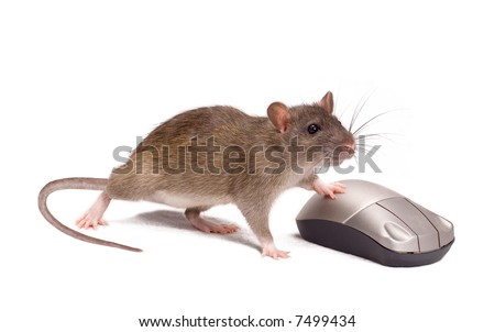Rat and the mouse on a white background