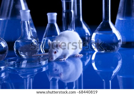Rat in laboratory, tests on animal. Experiments