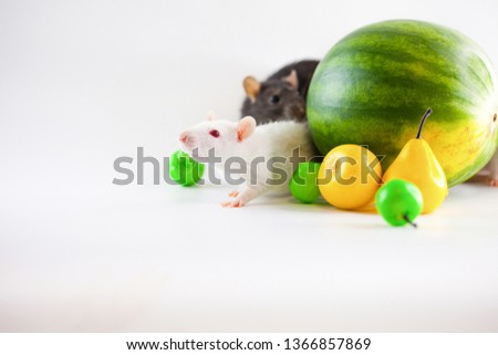 Rat symbol calendar. Berries and fruits on white background #1366857869