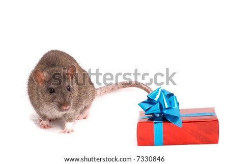 Rat with a gift on white background