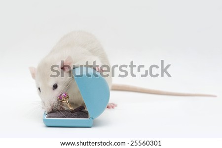 Rat with a ring