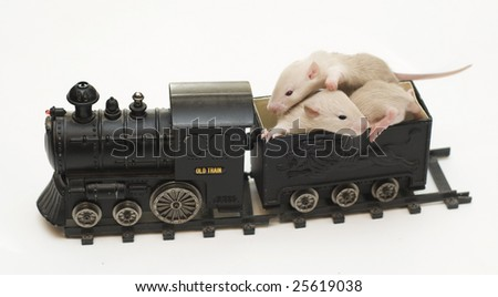 rats and train