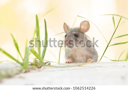 Rats outdoors yard home feeder