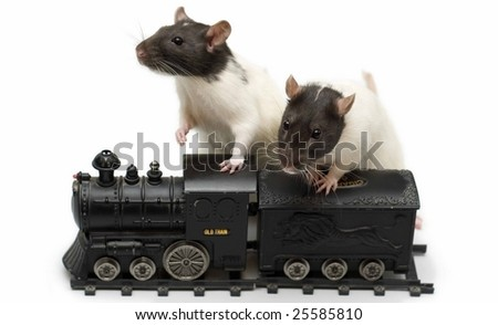Rats with train
