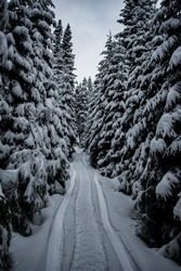 ravel frozen forest snow winter