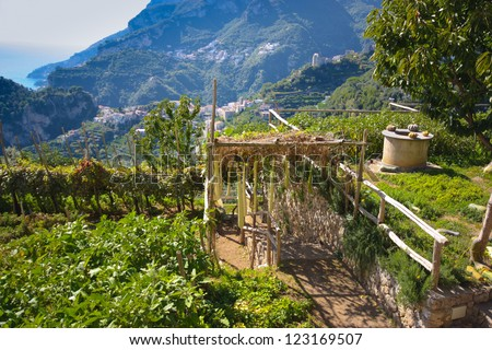 RAVELLO, ITALY - OCT 1:   Typical terraced farm in Ravello, Italy on Oct 1, 2011. Ravello along mountainous Amalfi Coast  is conducive to terracing due to its hilly terrain.