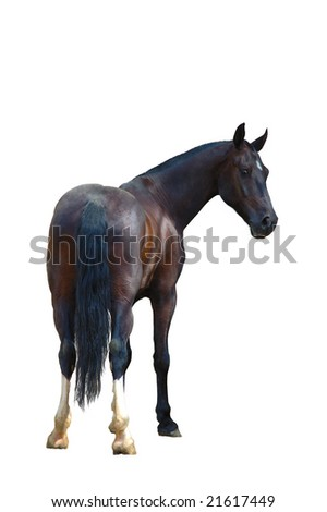 Raven horse isolated