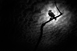 Raven on a barren branch with the Moon hidden behind clouds and providing illumination.
