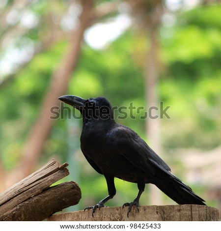 raven sitting on a wood