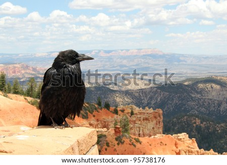 Raven Watching Out Over the Landscape, Bryce Canyon, Utah, USA