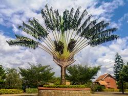 Ravenala, symbol of Madagascar known as traveller's tree or Madagascar Palm.