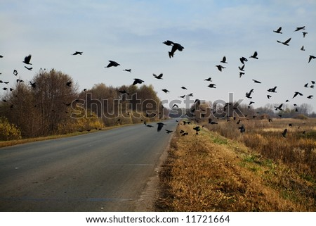Raven Flock Ravens Flock Flying Over The
