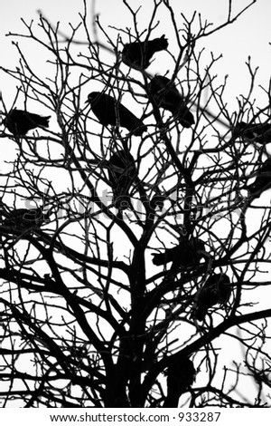 ravens on the branch
