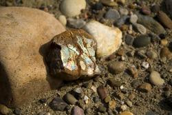 Raw ammolite found on a rock.