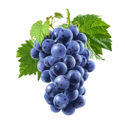 Raw blue grapes bunch isolated on white background as package design element