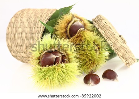 Raw chestnuts on white background