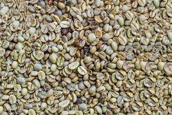 Raw coffee beans - Top view