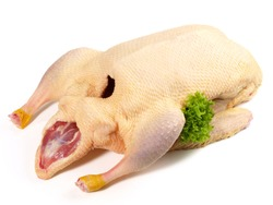 Raw Duck on white Background