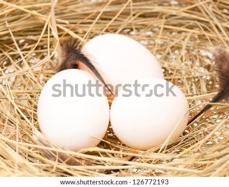 Raw eggs in a birds nest with feathers close-up