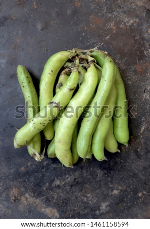 Raw Fava Bean pods on a gray background, shot from above
