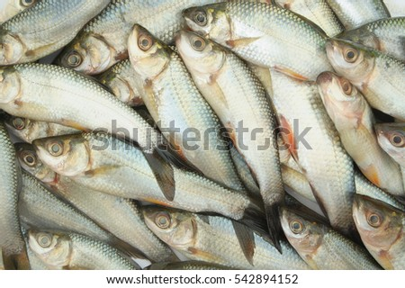 stock-photo-raw-fish-background-54289415