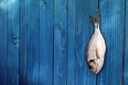 raw fish hanging on a blue wooden fence - Goldfish, gilthead sea bream