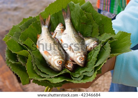 raw fish on green leafs in hands