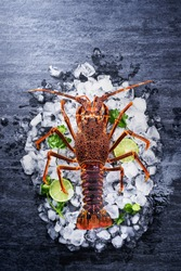 Raw fresh Cape rock lobster, West Coast rock lobster, Jasus lalandii on a dark slate background with cold ice cubes, top view, flat lay, overhead shot.