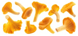Raw fresh chanterelle mushrooms isolated on white background with clipping path, collection