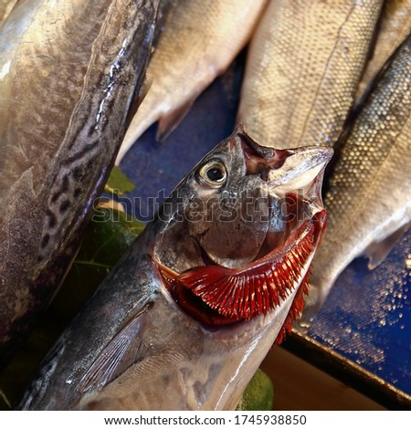 Raw fresh fish with red gills at the street market. Mackerel with splayed gills. Close up, selective focus Stockfoto ©