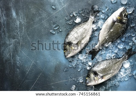 Raw fresh organic dorado or sea bream on ice cubes over blue slate,stone or concrete background.Top view with copy space.