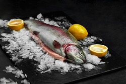 Raw fresh organic dorado or sea bream with lemon on ice cubes over black slate, stone or concrete background.