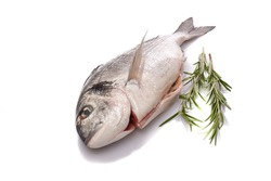 Raw gilthead fish with rosemary white isolated close-up