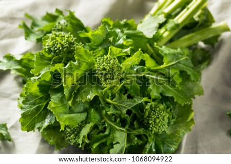 Raw Green Organic Broccoli Rabe Ready to Cook Foto stock ©