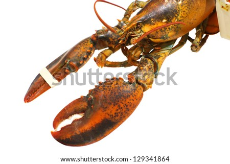 RAW lobster isolated on white background