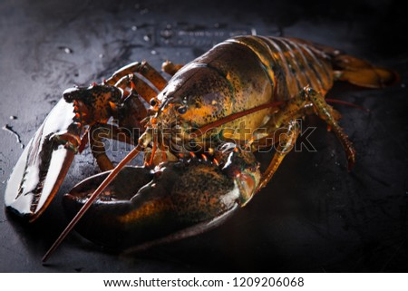 Raw lobster on a black stone table. #1209206068