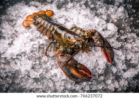 Raw lobster on ice on a black stone table top view #766237072