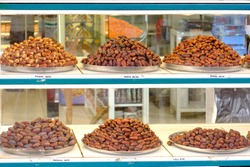 Raw Organic Dates arranged in showcase - Date is a symbol of wealth and abundance and has a special place in Islamic history and cultures