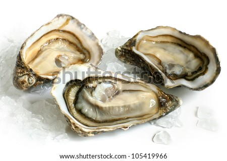 Raw oysters with ice on a white background