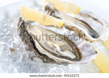 raw oysters with lemon and ice