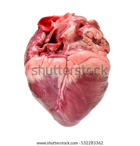 Free photos Real-human-heart | Avopix.com