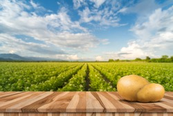 Raw potatoes on brown wooden table with plantation and blue sky
