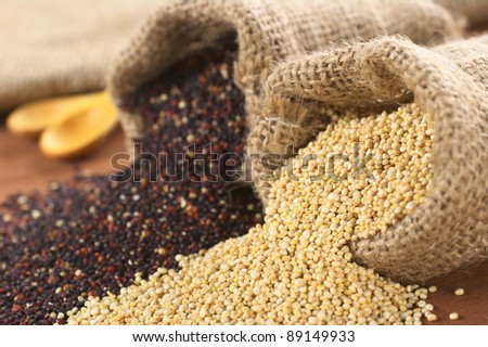 Raw red and white quinoa grains in jute sack. Quinoa is grown in the Andes region  and has high protein content and nutritional value (Selective Focus, Focus on the white quinoa at the sack opening)