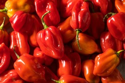 Raw Red Organic Habanero Peppers Ready to Cook