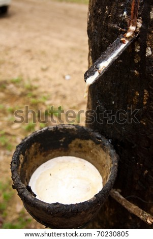 Raw rubber in the rubber cup.